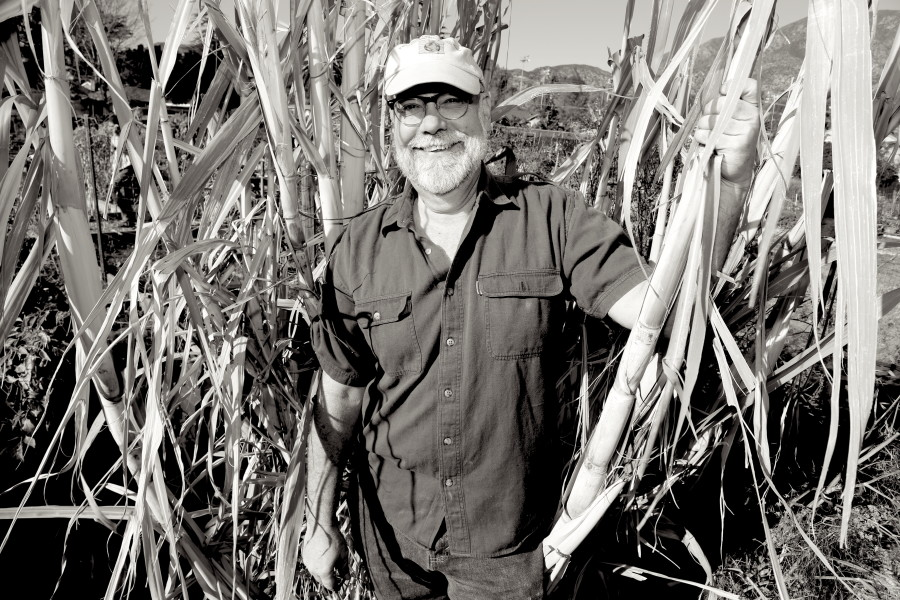 Surrounded by sugar cane at the Altadena Community Garden.